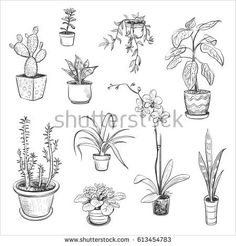 Plant Drawing, Painting & Drawing, Plant Sketches, Plant Tattoo, Interior Design Sketches, Drawing Clipart, Halloween Drawings, Chalk Drawings, Hand Drawn Flowers