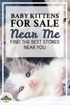 Baby Kittens For Sale Near Me: Find The Best Stores Near You! Small homesteading ideas, homesteading ideas simple living, homesteading ideas self sufficient, homesteading ideas small farm, homesteading ideas diy, homesteading ideas off grid, backyard homestead ideas, tiny homestead ideas, homesteading ideas gardening, Homestead farm, backyard Homestead, flower Gardening, vegetable Gardening. #homestead #homesteading #homesteader #homesteadlife #homesteadkitchen #homesteadinglife… Flower Gardening, Vegetable Gardening, Baby Kittens For Sale, Raising Cattle, Farm Lifestyle, Rabbit Breeds, Horse Feed, Homestead Farm, Cattle Farming