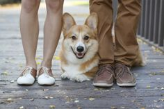 The addition of corgi to a romantic relationship is a wonderful thing. He stole the show at their engagement photoshoot