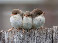 Preciosas fotos de pájaros mientras se protegen y se dan calor