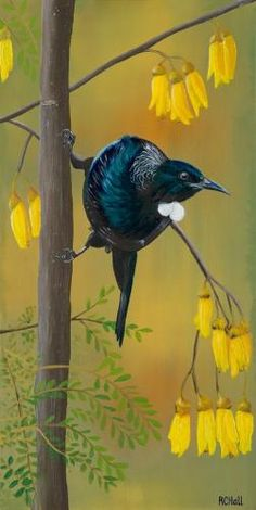 Tui in Kowhai tree- by New Zealand Artist Robyn Hall - Original sold - Prints… New Zealand Art, Artist, Painting, My Arts, Ink, Painted Rocks, Prints, Nz Art