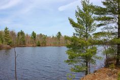 north American trees - Google 搜索