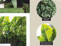 Front Garden Landscape, Garden Landscaping, Crassula Ovata, Elephant Ears, Blue Bird, Plant Leaves, Plants, Front Yard Landscaping, Plant