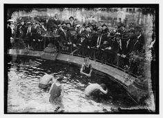 Diving for pennies, Madison Sq. (LOC)