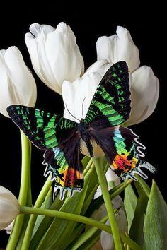 A Lovely Madagascar Butterfly