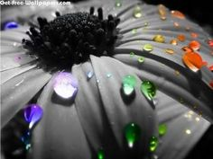 Free Colors Rain Drops On Flowers Wallpapers, Colors Rain Drops On Flowers Pictures, Colors Rain Drops On Flowers Photos, Colors Rain Drops On Flowers #12085 1024X768 wallpaper