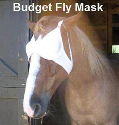 budget fly mask!