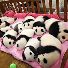 instead of babies i want to PANDAS