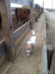 1000 Images About The Ranch On Pinterest Cattle Garage