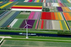 鳥が見る世界の絶景 10:オランダのチューリップ畑