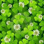 St. Patrick`s Day. Turn Yourself Green! | TutorZ.com