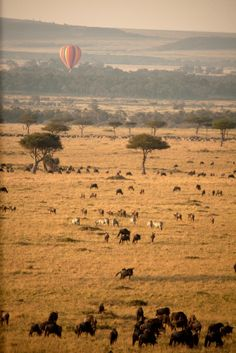 Masai Mara Gorilla Trekking, Close Encounters, African Countries, Habitats, Safari, Wildlife, Adventure, Nature, Animals