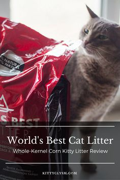 Cat Care Keeping Your Cat Healthy - Cat's Nine Lives Natural Cat Litter, Best Cat Litter, Gatos Cool, Cat Years, Cat Vs Dog, Feline Leukemia, Lots Of Cats, Cat Care Tips, Bad Cats