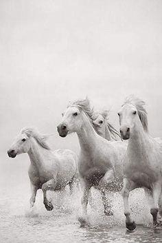 Drew Doggett Photography Drew Doggett - Spirit Rising Art