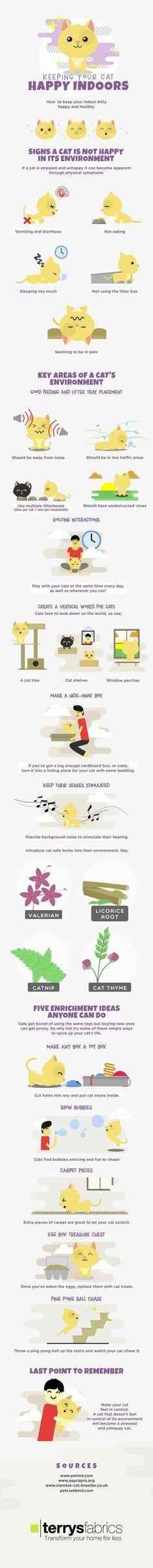 Cat Infographic: Keeping Your Inside Cat Happy! Diy Pour Chien, Catsu The Cat, Cat Hacks, Gatos Cats, Kitten Care, Cat Care Tips, Cat Behavior, Cat Health, Health Tips