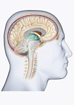 Conheça os tipos de tumor cerebral e saiba mais sobre diagnóstico, sintomas e…