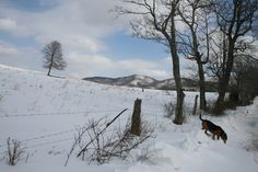 A winter view from the CCC Rd. near Montfair.