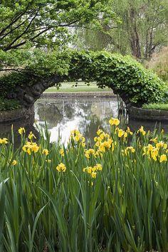 Carlton Gardens in Melbourne, (by moronif). Beautiful Gardens, Beautiful Flowers, Beautiful Places, Beautiful Gorgeous, Carlton Gardens, Landscape Design, Garden Design, My Secret Garden, Parcs