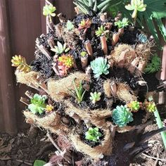 Dead fern tree repurposed into a succulent tree. Reuse that dead stump in your garden and make a succulent tree. Succulents Diy, Planting Succulents, Succulent Tree, Making A Compost Bin, Tree Fern, Pine Cone Decorations, Perfect Plants, Fall Diy, Summer Garden