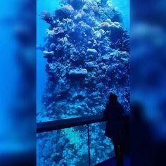 Great Barrier Reef  - panorama (asisi)  #art #asisi #stunning #gasometer #australia #nature #photography #greatbarrierreef #panorama #360degrees #gigantic #like4like #likeforlike #tumblr #followforfollow #follow4follow #lfl #instalike #instagram #instacool #instapic #photooftheday by vani_x3_ http://ift.tt/1UokkV2
