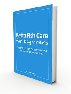 Betta fish can make fantastic pets. We have free guides and articles to help you raise a healthy and happy Betta / Siamese / Japanese fighting fish. Colorful Fish, Tropical Fish, Freshwater Aquarium, Aquarium Fish, Betta Fish Care, Beta Fish, African Cichlids, Ocean Life, Free Ebooks