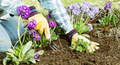 5 Steps to a Successful Spring Garden - GoodHousekeeping.com