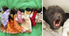 Orphaned Baby Bats At This Australian Bat Hospital Are Too Adorable | Bored Panda