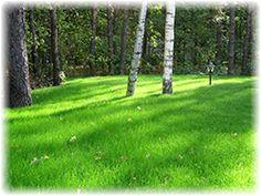 Идеальный газон радость владельцев