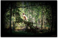 Eero Paso. Naked man climbed a tree 1995.