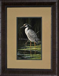 King of the Swamp -- Yellow-crowned Night-Heron Decor Print