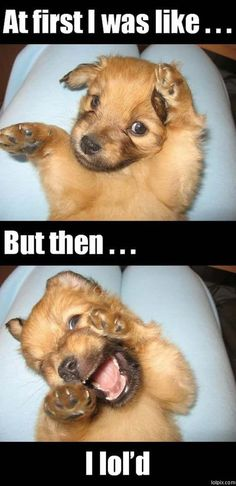 Awww my life as a dog!