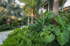 Beautiful and refreshing tropical garden landscaping ideas . - Beautiful and refreshing tropical garden landscaping ideas - Tropical Garden Design, Tropical Backyard, Backyard Pool Landscaping, Tropical Landscaping, Landscaping Plants, Tropical Plants, Landscaping Design, Landscaping Software, Tropical Flowers