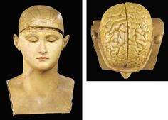 The William Bonardo Collection of Wax Anatomical Models: An unusually large phrenology head.