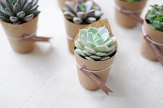 Succulent place cards/favor...oh what a great world this is!