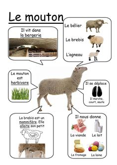 Mouton - Animaux de la ferme ( divers fiche) animals silly animals animal mashups animal printables majestic animals animals and pets funny hilarious animal French Teacher, Teaching French, How To Speak French, Learn French, Science For Kids, Science Nature, French Education, Core French, French Classroom