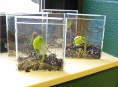 Germinate Seeds | 32 Seed Sprouting Ideas from Recycled Materials