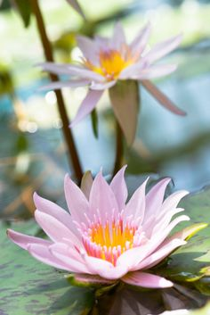 Water Lily by Akihiro Satoh on 500px, 93.9