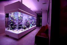 Now that's an aquarium... #tankspiration