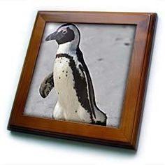 """African Penguin, Boulders beach, South Africa-AF42 RBE0067 - Ralph H. Bendjebar - 8x8 Framed Tile by 3dRose. $22.99. Solid wood frame. Inset high gloss 6"""" x 6"""" ceramic tile.. Keyhole in the back of frame allows for easy hanging.. Dimensions: 8"""" H x 8"""" W x 1/2"""" D. Cherry Finish. African Penguin, Boulders beach, South Africa-AF42 RBE0067 - Ralph H. Bendjebar Framed Tile is 8"""" x 8"""" with a 6"""" x 6"""" high gloss inset ceramic tile, surrounded by a solid wood frame with pre-dr..."""