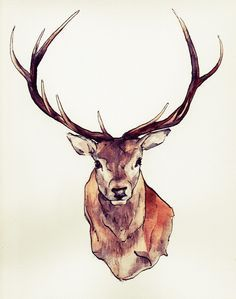 stag head drawing - Google Search