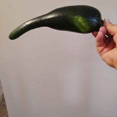This one goes out to all my Aussie friends! It appears we are growing Bin Bird wanna be zucchinis up here! Zucchini, Going Out, Bird, Friends, Garden, Instagram, Amigos, Lawn And Garden, Birds