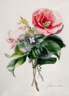 Camellia And Broom Painting  - Camellia And Broom Fine Art Print