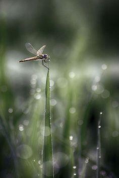 Maravillas de la naturaleza. Cosas que hay que ver
