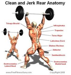 Clean and jerk Anatomy Weight Loss For Men, Weight Lifting, Fitness Gym, Fitness Motivation, Bodybuilder, Health And Physical Education, Wod Workout, Exercise Physiology, Olympic Weightlifting