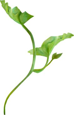 NLD Leaf 2.png