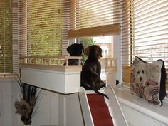 This is someone who loves their dogs to build them a window seat complete with rails so they don't fall off!
