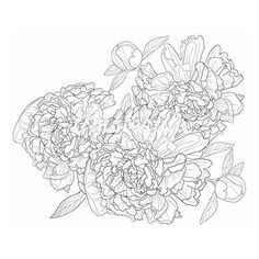 Vector illustration of monochrome background with peonies ❤ liked on Polyvore