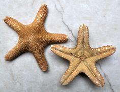 Jungle Starfish 2 pcs.  4-5