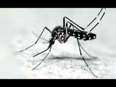 Για να μη σε τσιμπάνε τα κουνούπια και τι να κάνεις αν σε τσιμπήσουν Bobby Pins, Hair Accessories, Pets, Animals, Videos, Youtube, Animales, Animaux, Hair Pins