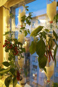 Recycled bottle window farm